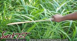 Cutting bush with cutlass, the one that got away short story by Omilla Mungroo, Sweet T&T, Sweet TnT, Trinidad and Tobago, Trini, vacation, travel,