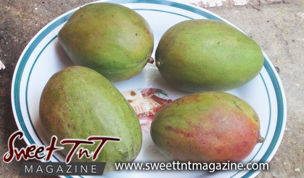Completely new My weakness for Paulover and Julie mangoes - Sweet TnT Magazine RL23