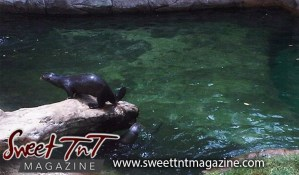 Otters at Emperor Valley Zoo by Marissa Armoogam in Sweet T&T, Sweet TnT Magazine, Trinidad and Tobago, Trini, vacation, travel