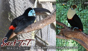 Toucans, Emperor Valley Zoo, Sweet T&T, Sweet TnT, Trinidad and Tobago, Trini, travel, vacation, animals