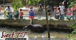 Water animal, Emperor Valley Zoo, Sweet T&T, Sweet TnT, Trinidad and Tobago, Trini, travel, vacation, animals, Zoorific