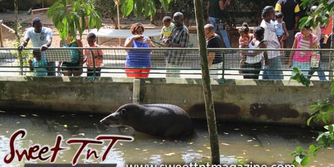 Water animal, Emperor Valley Zoo, Sweet T&T, Sweet TnT, Trinidad and Tobago, Trini, travel, vacation, animals, Zoorific