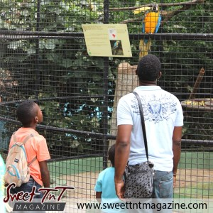 Family looking at macaw, Emperor Valley Zoo, Sweet T&T, Sweet TnT, Trinidad and Tobago, Trini, travel, vacation, animals