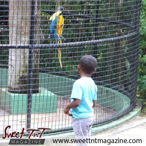 Boy looking at macaw, parrot, Emperor Valley Zoo, Sweet T&T, Sweet TnT, Trinidad and Tobago, Trini, travel, vacation, animals, Zoorific