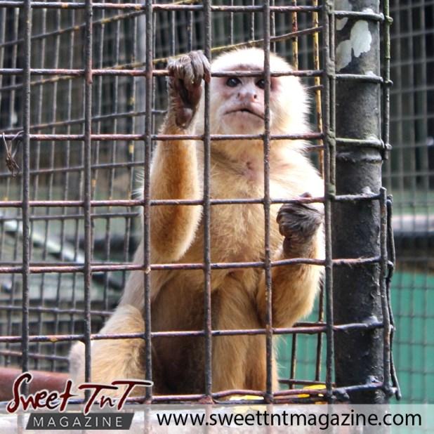 zoo monkey1