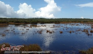 Icacos brown grass in swirl water green grass blue sky by Marika Mohammed for story Icacos end of Trinidad in Sweet T&T, Sweet TnT, Trinidad and Tobago, Trini, vacation, travel
