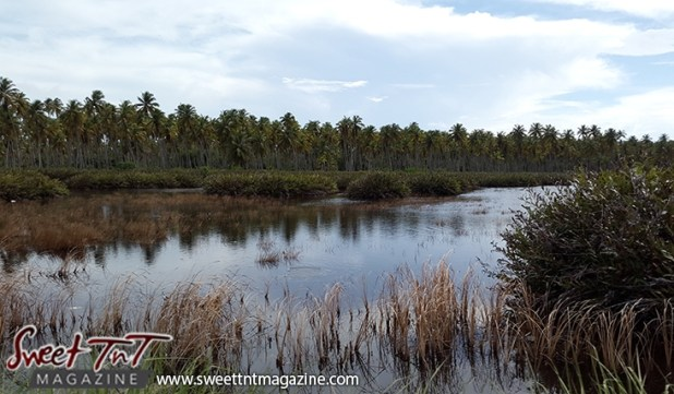 Icacos brown grass in water green grass coconut trees by Marika Mohammed for story Icacos end of Trinidad in Sweet T&T, Sweet TnT, Trinidad and Tobago, Trini, vacation, travel