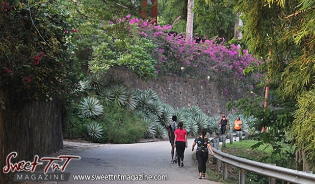 3 women and 2 men walking beautiful scenery exercising on Lady Chancellor Hill Port of Spain for story original outdoor gym in Sweet T&T, Sweet TnT, Trinidad and Tobago, Trini, vacation, travel