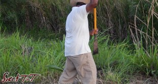 Farmer Fyzul Khan, father Candida Khan and Katrina Khan farming at work the land, struggles with Dry Season and thieves, wears white t shirt, brown khaki long pants in Sweet T&T, Sweet TnT, Trinidad and Tobago, Trini, vacation, travel