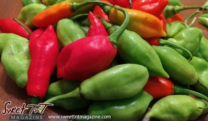 Crossed peppers: Pimento and Bird