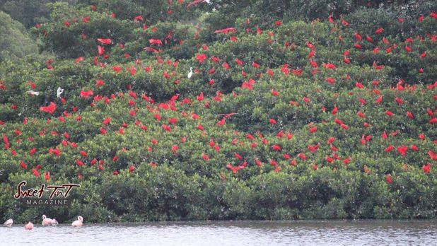 Caroni Bird Sanctuary 2021