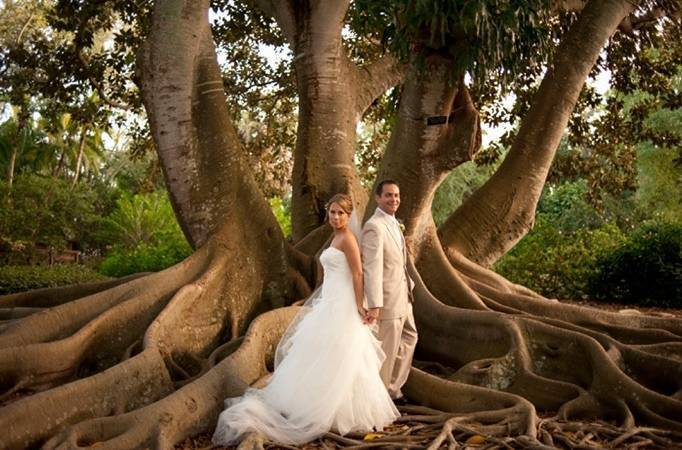 fig tree wedding