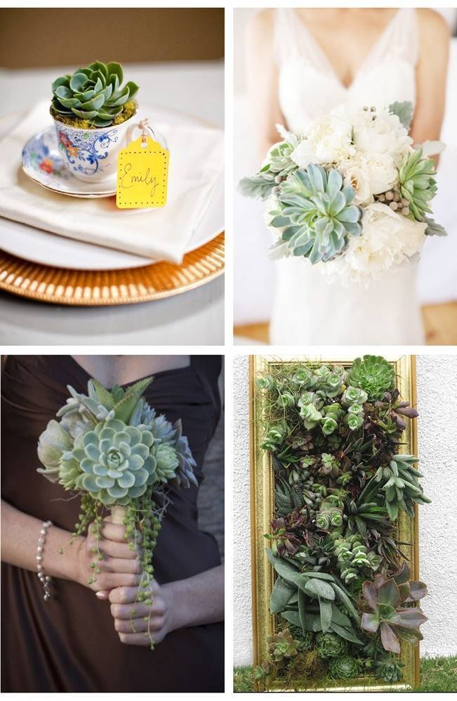 succulent wedding favors, succulent wall garden