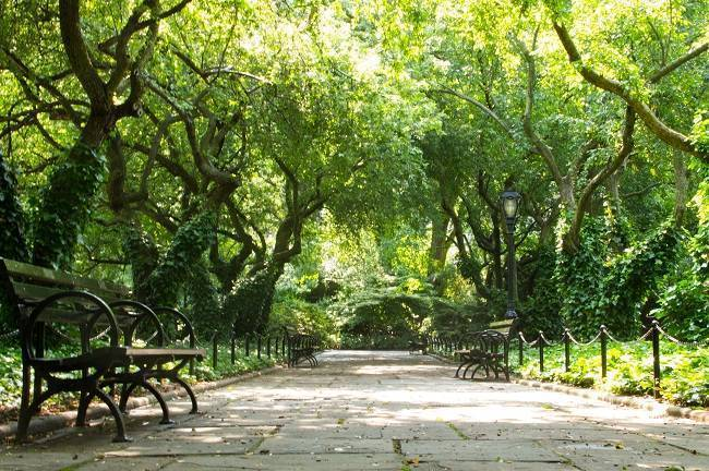 Natural Weddings In Nyc Interview With A Central Park Wedding