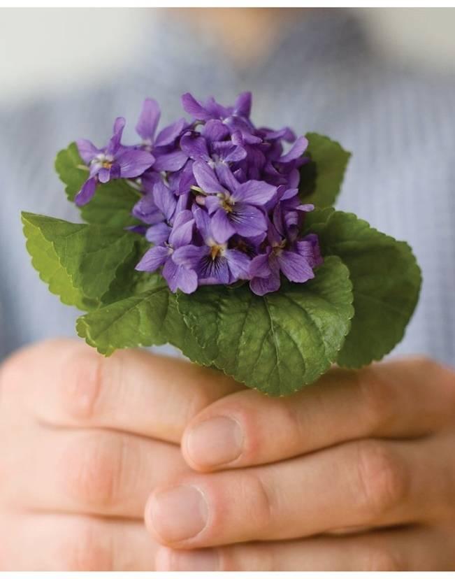 wild violet bouquet
