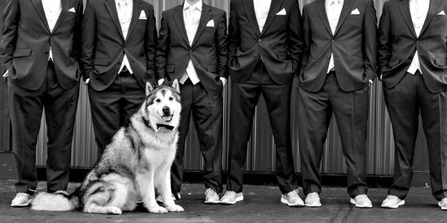 "groomsmen with ""best dog"" malamute"