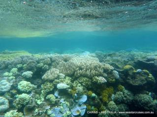 amazing corals, sometimes super shallow to snorkel over