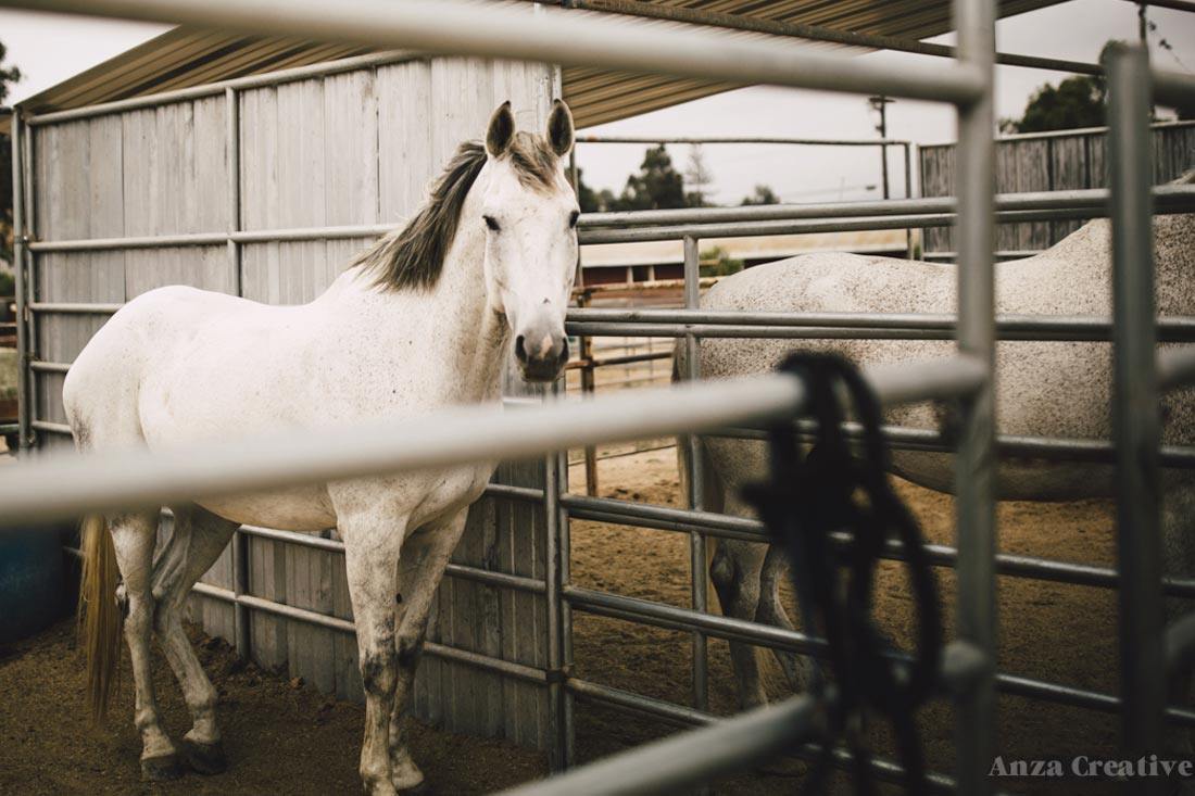 About Sweetwater Farms Horses