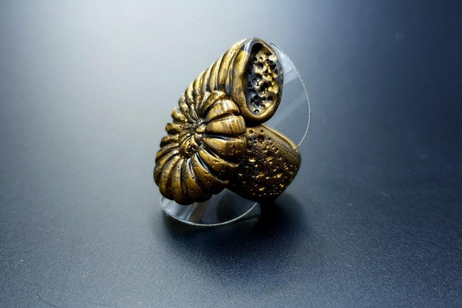 Ammonite Ring 05