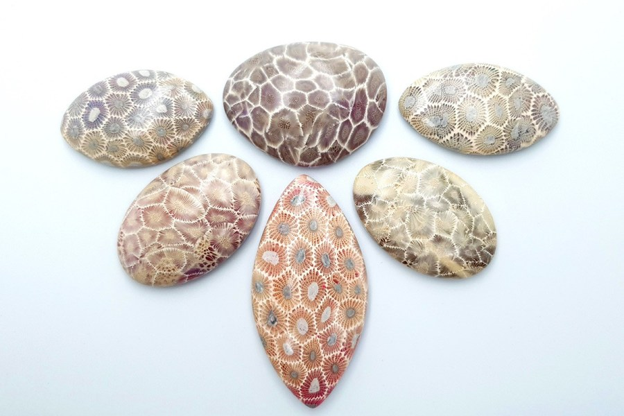 Petoskey Stone Set 01 p02
