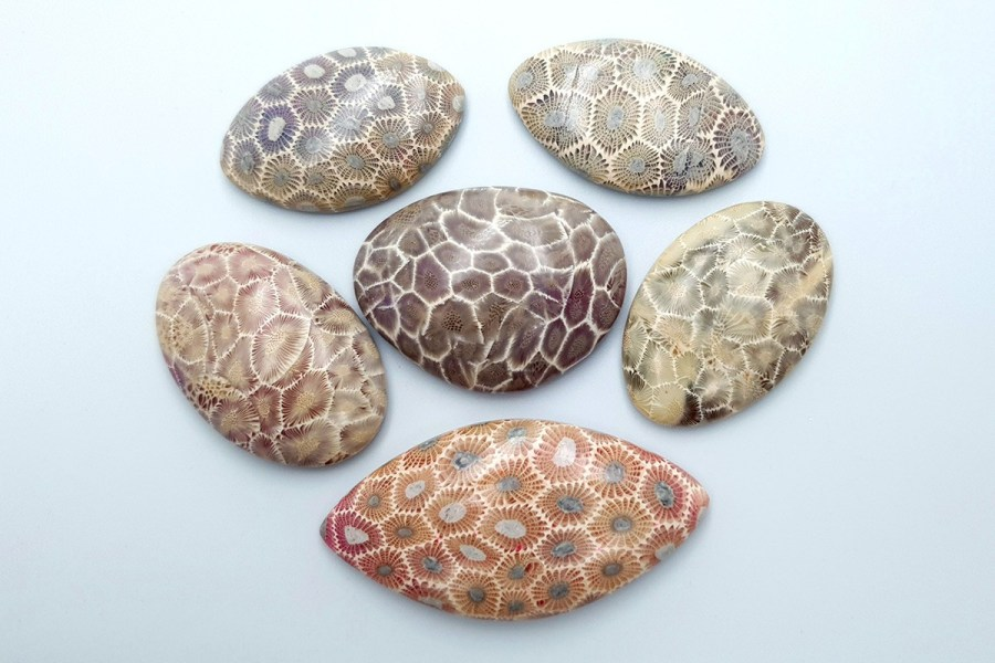 Petoskey Stone Set 01 p07