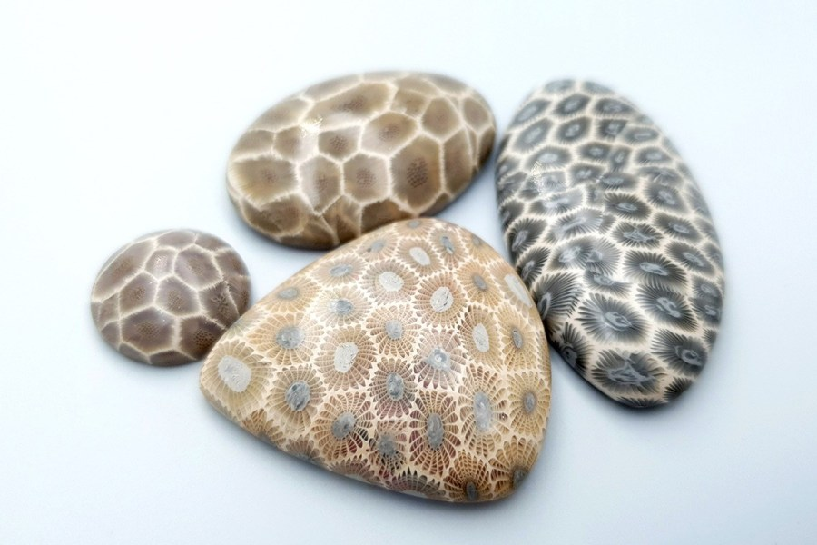 Petoskey Stone Set 03 p03