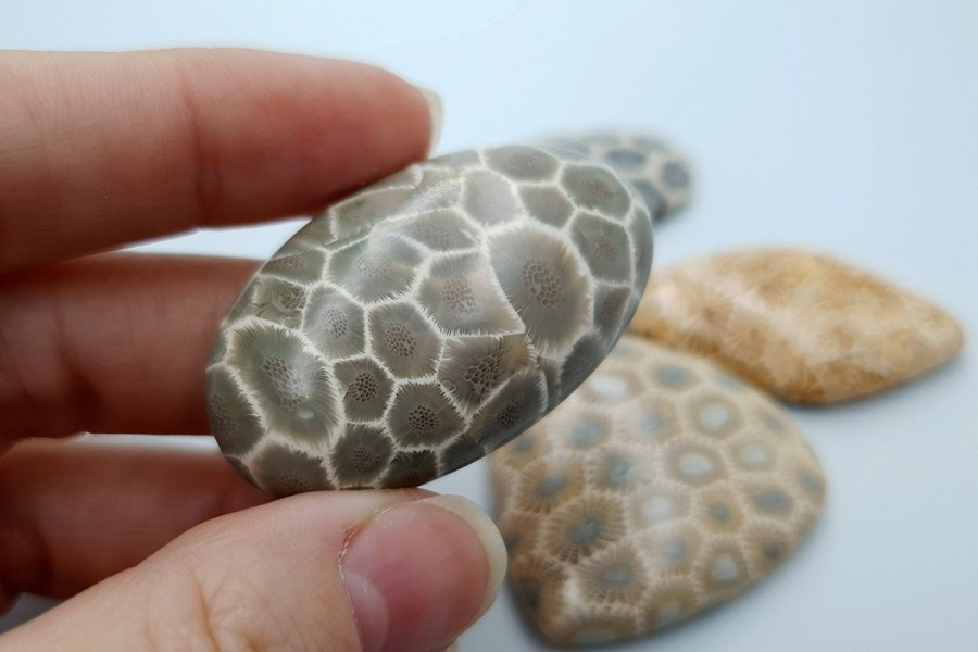 Petoskey Stone Set 06 p03