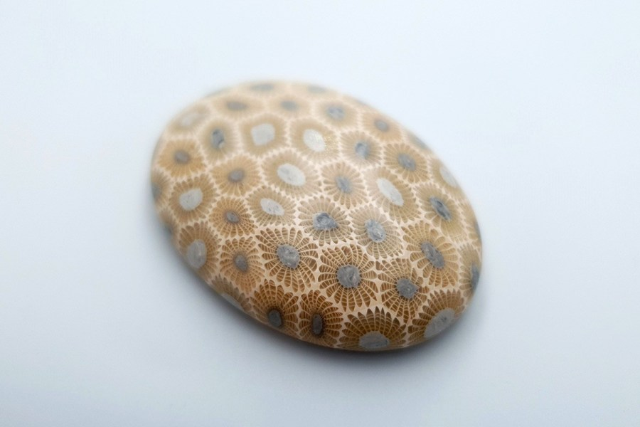 Petoskey Stone Set 07 p03