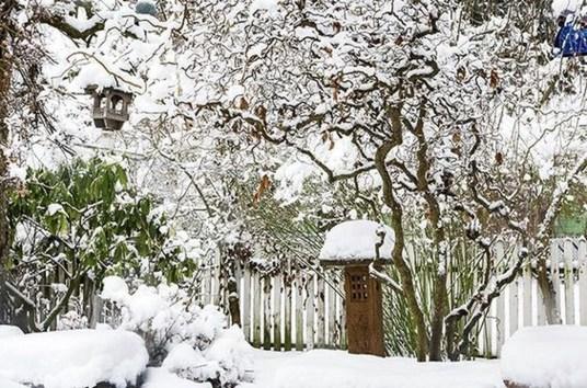 Amazing Winter Garden Landscape 30