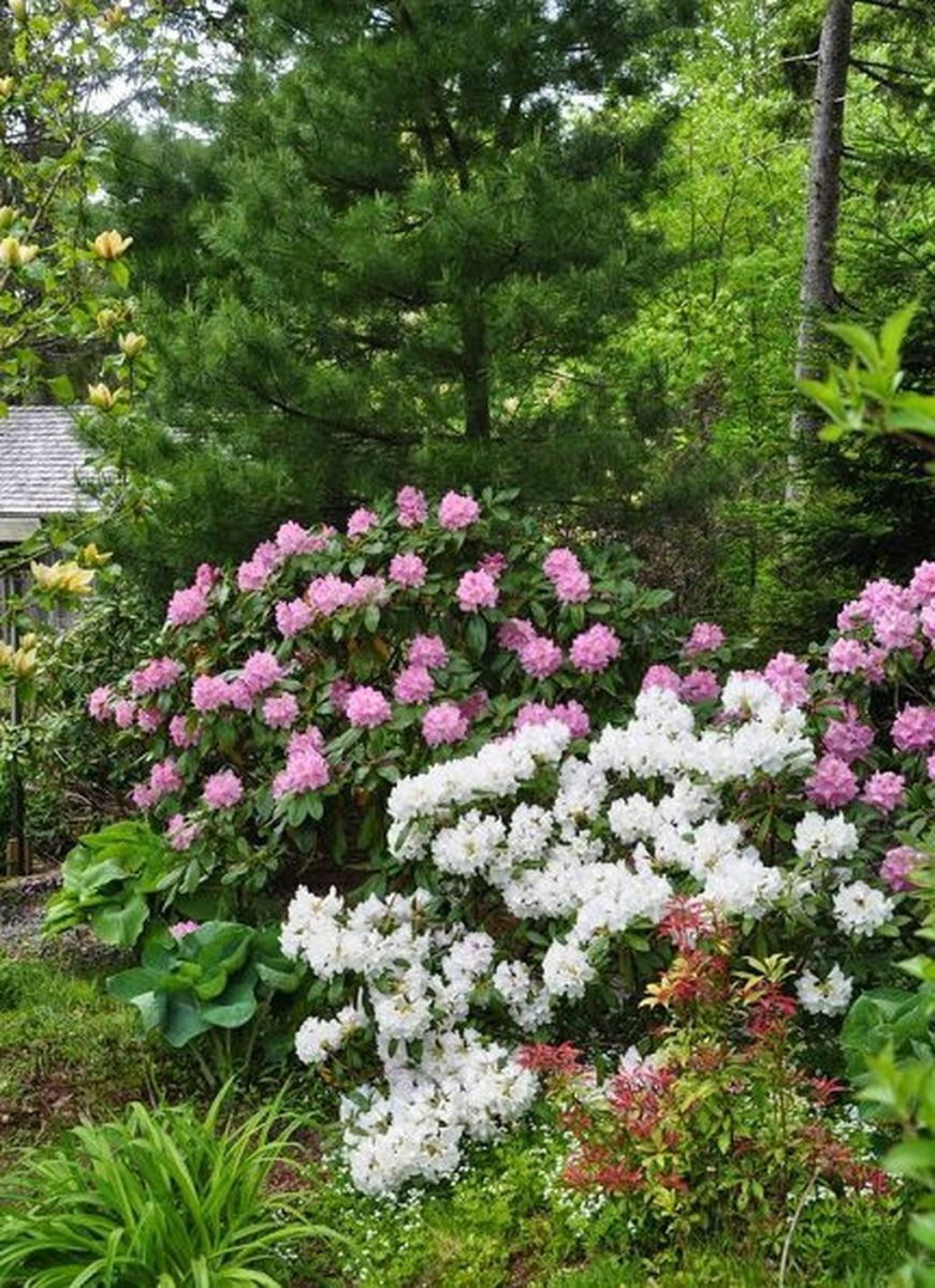 Stunning Backyard Flower Garden Ideas You Should Copy Now 22