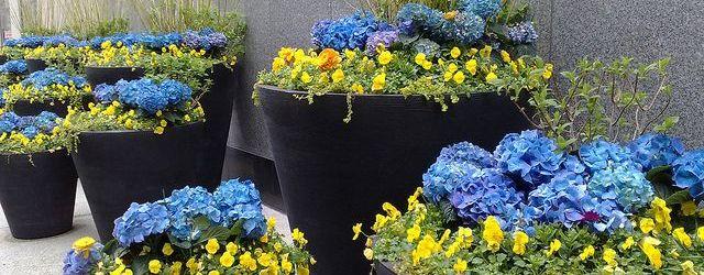 Large Outdoor Flower Pots