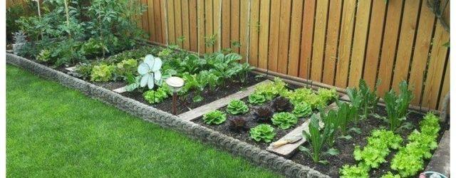 Small Backyard Backyard Vegetable Garden Ideas