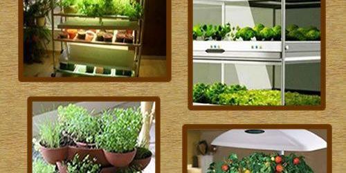 Indoor Vegetable Garden Ideas