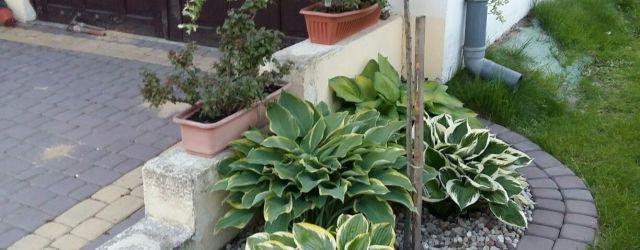 Very Small Front Garden Ideas