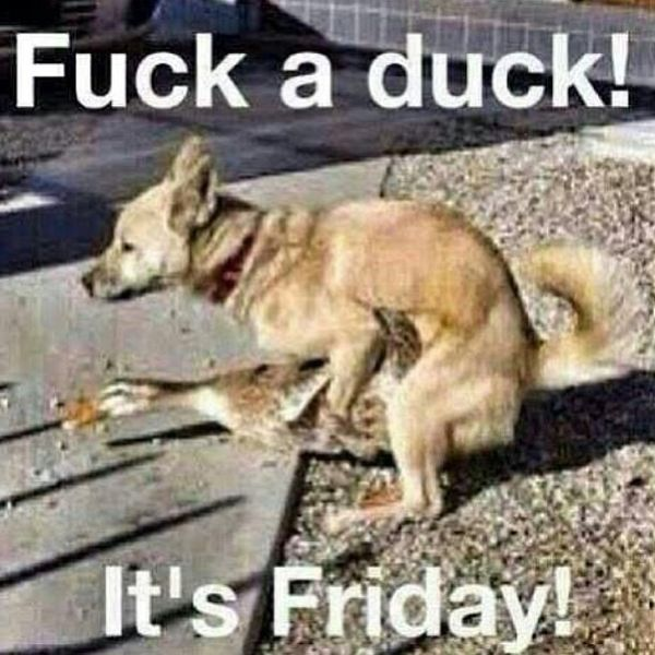 Fuck a duck its friday