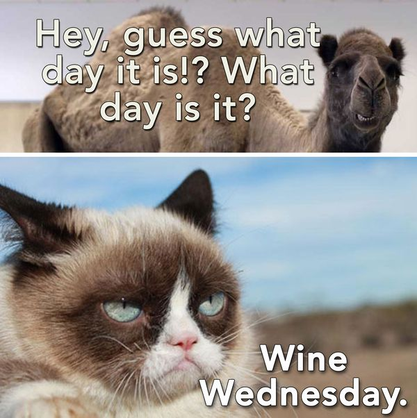 Funny Meme For The Day : Wednesday memes funny hump day with quotes