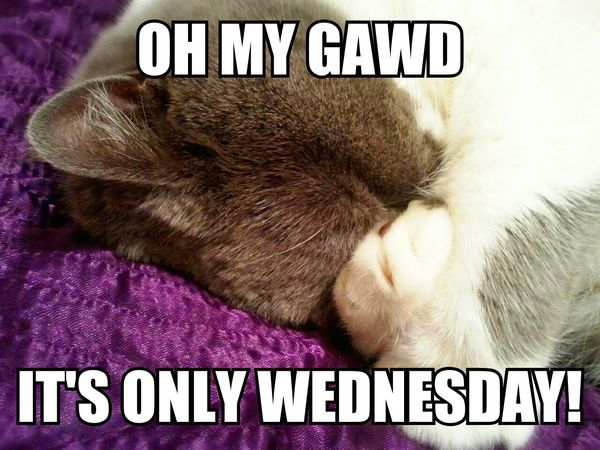 funny memes about wednesday with cat