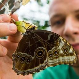 Der Herr der Schmetterlinge