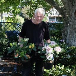 Berliner herbstblühender Rhododendron auf den Thüringer Gartentagen