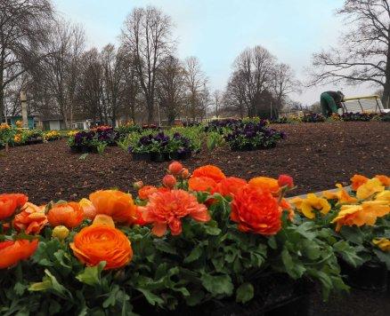 Frühlingsblüten fürs Beet
