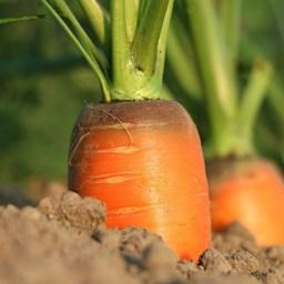 Maulwurfgänge, Kräuterbonbons und knackiges Gemüse
