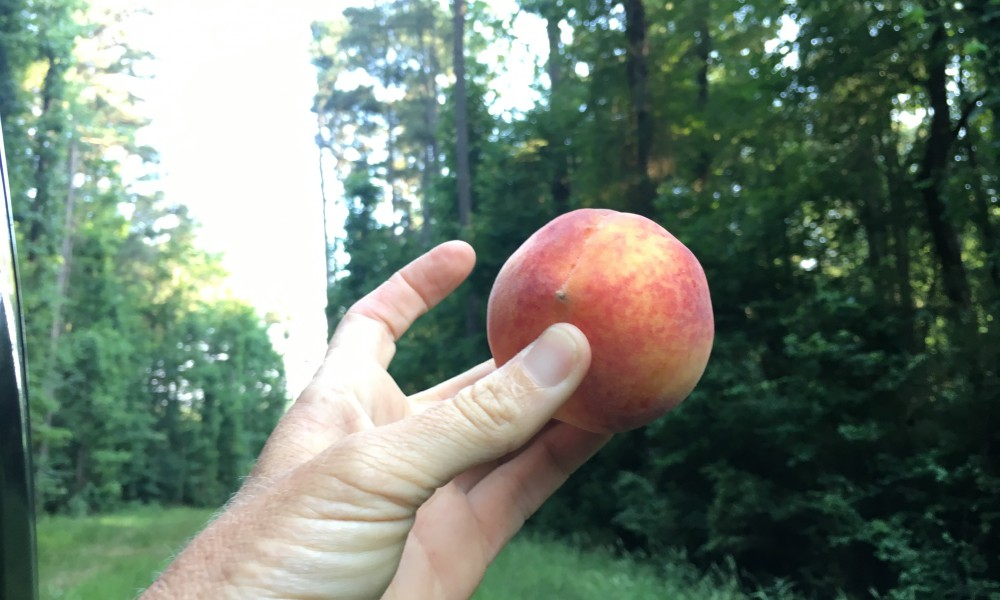 Carolynn took me to an incredible secret swimming hole with a Georgia peach to savor along the way!