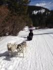 dogsledding-breck