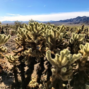 Joshua Tree's Most Dangerous Hike