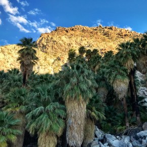 Hike to Fortynine Palms Oasis
