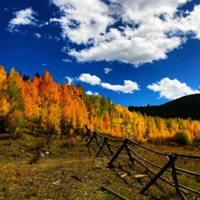 Fall Gold Mine in Aspen Alley