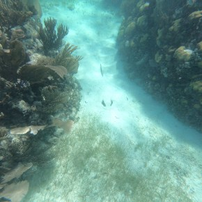 Snorkeling in Bacalar Chico in Belize