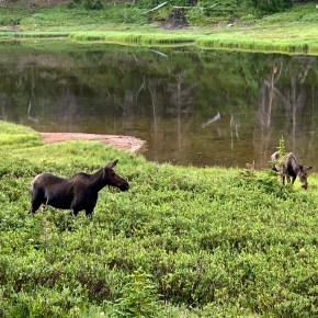 Want to See a Moose? Explore the West Side of Rocky Mountain National Park