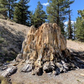 See Petrified Ancient Redwoods at Florissant Fossil Beds National Monument near Cripple Creek, Colorado