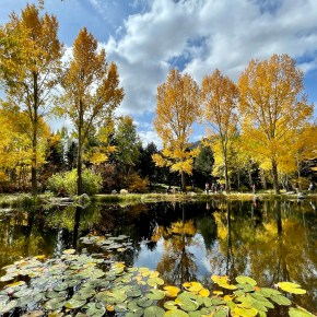 Fabulous Fall Colors Even in the Rain – Where to go Leaf Peeping in Steamboat Springs
